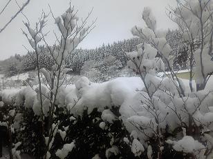 2010年末冬.JPG